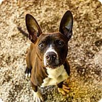 Adopt A Pet :: WISCONSIN - Decatur, GA
