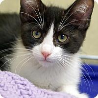 Adopt A Pet :: Riley - Alameda, CA