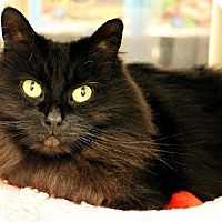 Adopt A Pet :: Bonnie - Herndon, VA