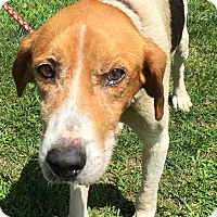 Adopt A Pet :: Kenneth - Morehead, KY