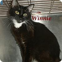 Adopt A Pet :: Winnie - El Cajon, CA
