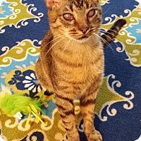 Adopt A Pet :: Kremlin - Edmond, OK