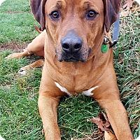 Adopt A Pet :: Bantu - Mount Gilead, OH