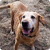 Adopt A Pet :: Samson - Salem, OR
