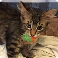 Adopt A Pet :: Cody - McHenry, IL