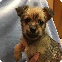 Adopt A Pet :: Jamie - Glastonbury, CT
