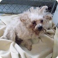 Adopt A Pet :: Lydia - Eighty Four, PA