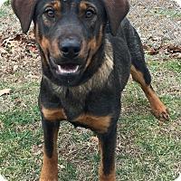 Adopt A Pet :: Darva - Morehead, KY