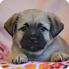 Adopt A Pet :: Effie
