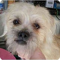 Adopt A Pet :: Gaz Tzu - Templeton, CA