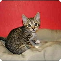 Adopt A Pet :: TERRENCE - SILVER SPRING, MD