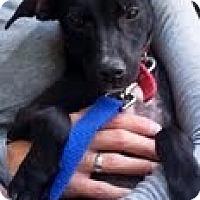 Adopt A Pet :: Spryte - Homewood, AL