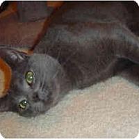 Adopt A Pet :: Gilligan - Modesto, CA