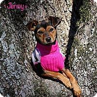 Adopt A Pet :: Jenny - Flowery Branch, GA