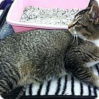 Adopt A Pet :: Fitzgerald - Riverhead, NY