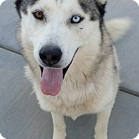 Adopt A Pet :: Harkin - Apple valley, CA