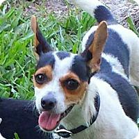 Adopt A Pet :: STAR - Terra Ceia, FL