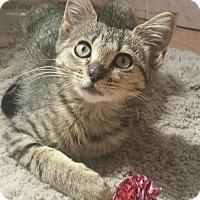 Adopt A Pet :: Mabel - Brooklyn, NY