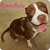 Adopt A Pet :: Annabella - Converse, TX