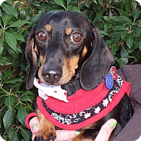 Adopt A Pet :: KURO-CHAN - Portland, OR