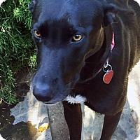 Adopt A Pet :: Little Abbey - San Diego, CA