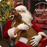 Adopt A Pet :: Fletch - Drumbo, ON