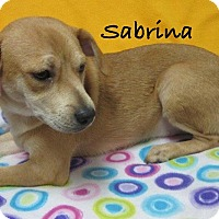 Adopt A Pet :: Sabrina - Bartonsville, PA
