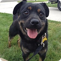 Adopt A Pet :: Munch - Salt Lake City, UT