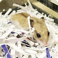 Adopt A Pet :: Flipper - Fairport, NY