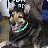 Adopt A Pet :: LUCKY LOU - Albany, NY
