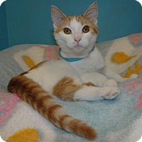 Adopt A Pet :: Patrick - Cincinnati, OH