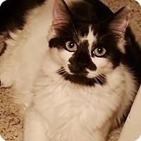 Adopt A Pet :: Angela - Modesto, CA