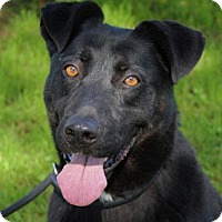 Adopt A Pet :: GEORGE-Low Fees, Neutered - Red Bluff, CA