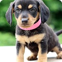 Adopt A Pet :: Hayden - Waldorf, MD