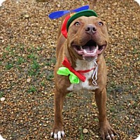 Adopt A Pet :: Vinnie - Columbus, MS
