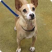 Adopt A Pet :: Bongo - Sacramento, CA