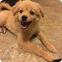Adopt A Pet :: Ollie - Chester, IL