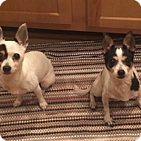 Adopt A Pet :: Nella - Essington, PA