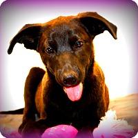 Labrador Retriever Mix Puppy for adoption in Glastonbury, Connecticut - Leila~ adopted!