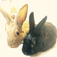 Other/Unknown Mix for adoption in Idaho Falls, Idaho - Carrot