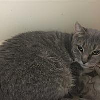 Adopt A Pet :: Charlie - Saylorsburg, PA