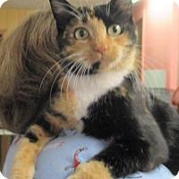 Adopt A Pet :: Celine - Reeds Spring, MO