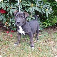 Adopt A Pet :: BEAN - McKinleyville, CA