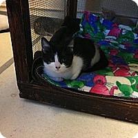 Adopt A Pet :: Estee - Lancaster, MA