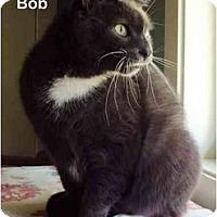 Adopt A Pet :: Bob - Portland, OR