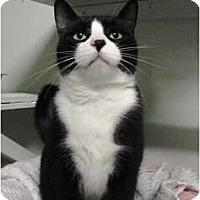 Adopt A Pet :: Bella Trix - Mission, BC