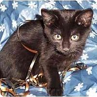 Adopt A Pet :: Diesel - Delmont, PA