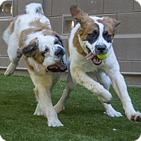 Adopt A Pet :: LUKE Skywalker & Princess LEIA - Glendale, AZ