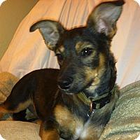 Adopt A Pet :: Jay - Phoenix, AZ