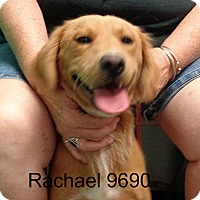 Adopt A Pet :: Rachel - baltimore, MD
